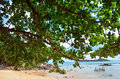 Rawai beach of phuket thailand is at the southern tip it is much less touristy than nearby kata and patong beaches this palm Royalty Free Stock Photography