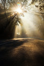Rays of the sun on a misty morning shine through branches tree in fog Stock Photos