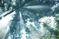 The rays of the sun permeate through the branches of the trees w