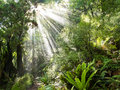 Rays of sunlight beam trough dense tropical jungle Royalty Free Stock Image