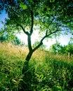 Árbol de ciruelo Imágenes de archivo libres de regalías