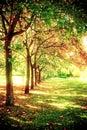 Árboles en una fila Imágenes de archivo libres de regalías