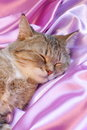 Rcat on pink valentines day card stock photos cat sleeping silk sweet dreams Stock Photo