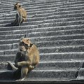 We re perfect strangers monkeys sit on rooftop Stock Photography