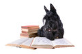Reading dog scotch terrier with books on a white background Royalty Free Stock Photography