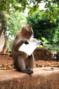 The reading monkey. Royalty Free Stock Images