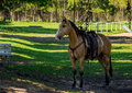Ready to ride a horse Royalty Free Stock Image