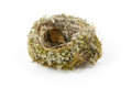 Real empty bird nest Royalty Free Stock Photography