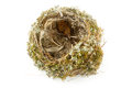 Real empty bird nest Royalty Free Stock Image
