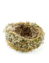 Real empty bird nest Stock Photo