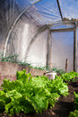 Real greenhouse Royalty Free Stock Photography