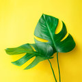 Real leaves on pastel color background.Botanical tropical Royalty Free Stock Photo