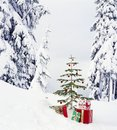 Real, live Christmas tree and presents gifts outdoors with snowy forest wilderness landscape background. Beautiful, simple holiday Royalty Free Stock Photo