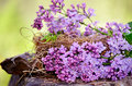 Real nest with lilac flower Royalty Free Stock Photo