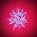A real snowflake macro Royalty Free Stock Photo