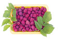 Real summer raspberries Stock Photo