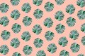 Real tropical monstera leaves pattern design on pastel color Royalty Free Stock Photo