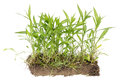 Real uncultivated field isolated fragment Royalty Free Stock Photo