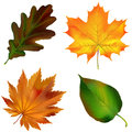 Realistic autumn leaves. Vector illustration