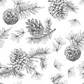 Realistic botanical ink sketch of fir tree branches with pine cone on white background. Vector illustrations Royalty Free Stock Photo