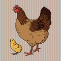 Realistic broody chicken and baby chick side view vector illustration of Royalty Free Stock Photography
