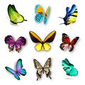 Realistic Butterfly Set Royalty Free Stock Photo
