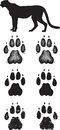 Realistic cheetah tracks or footprints a pair of done in illustration styles Royalty Free Stock Image