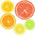 Realistic citrics, set of fruit slices Royalty Free Stock Photo