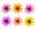 Realistic 3D Set of Colorful Daisy Flowers for Spring Season