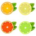 Realistic Detailed Citrus Set. Vector