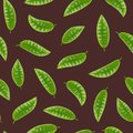 Realistic Detailed 3d Elements Set of Tea Seamless Pattern Background. Vector