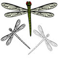 Realistic Dragonfly Stock Photography