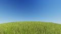 Realistic grassy hill on a background of pure blue sky 3D rendering