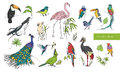 Realistic hand drawn colorful collection of beautiful exotic tropical birds with palm leaves. Flamingos, cockatoo