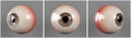 Realistic human eyeballs brown iris pupil