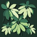 Vector realistic leaf. Tropical leaves.