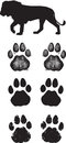 Realistic lion tracks or footprints in three illustrated styles Royalty Free Stock Image