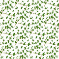 Realistic natural seamless pattern with evergreen herb. Thyme branch and leaves on white background. Flora style. Vector illustra