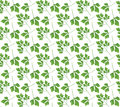 Realistic natural seamless pattern with green herb. Parsley branch and  leaves on white background. Flora style. Vector illustrati Royalty Free Stock Photo