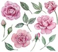Realistic Pink Roses Clipart. ...
