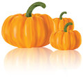 Realistic pumpkins Royalty Free Stock Photos