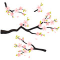 Realistic sakura japan cherry branch with blooming flowers