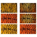 Realistic Tiger Stripes Vector Pattern Texture Background Stock Collection Royalty Free Stock Photo