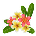 Realistic tropical flower and leaf isolated on white