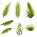 Realistic tropical green palm leaves set isolated on white background. Exotic jungle flora. Elements for your design Royalty Free Stock Photo