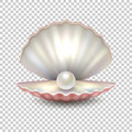 Realistic vector beautiful natural open sea pearl shell closeup isolated on transparent background. Design template