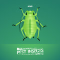 Realistic vector illustration of insect Aphidoidea, aphis Royalty Free Stock Photo