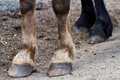 Rear hooves horse detailed view on Stock Image