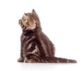 Rear view of tabby-cat kitten on white Stock Image