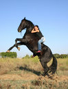 Rearing black stallion Stock Images